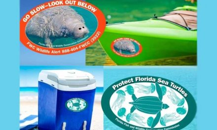Just released! FWC's 2021-2022 manatee and sea turtle decals