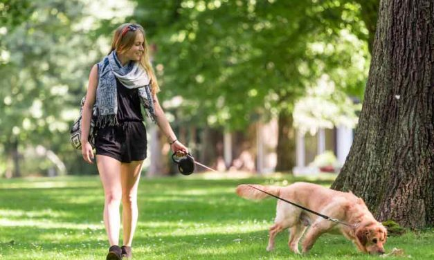 Orlando Health: Prevent Dog-Walking Injuries with These Tips