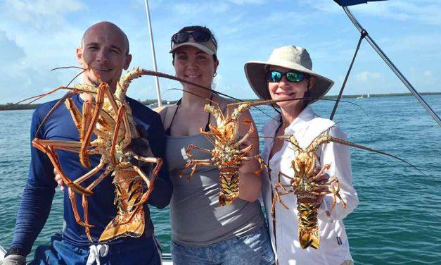 Spiny lobster seasons begins soon, two-day recreational mini-season July 28-29