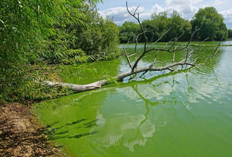 Blue-green algae bloom detected in Kissimmee River, Health officials in Osceola warn public