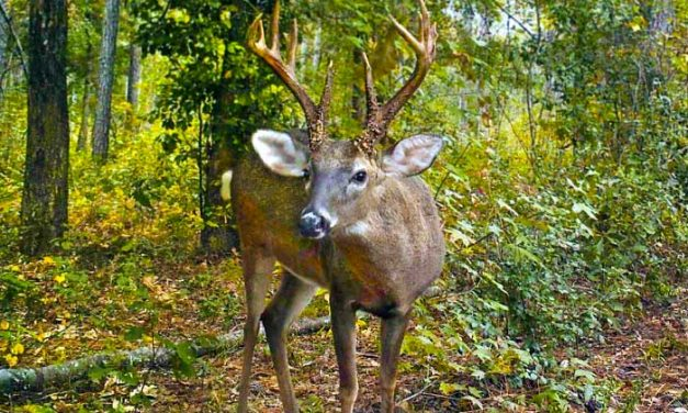 Wondering about the impact of antler point regulations in Florida? Find out now!