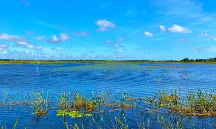 East Lake Toho drawdown project showing positive signs of success, FWC says